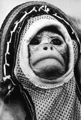 4 Dic 1959, Regresa del espacio  Primer Mono Astronauta